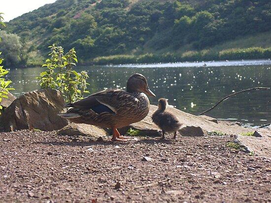 Duckling! by stooferdoofer