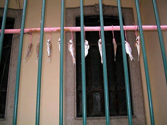 Drying Fish, Macau by John Douglas