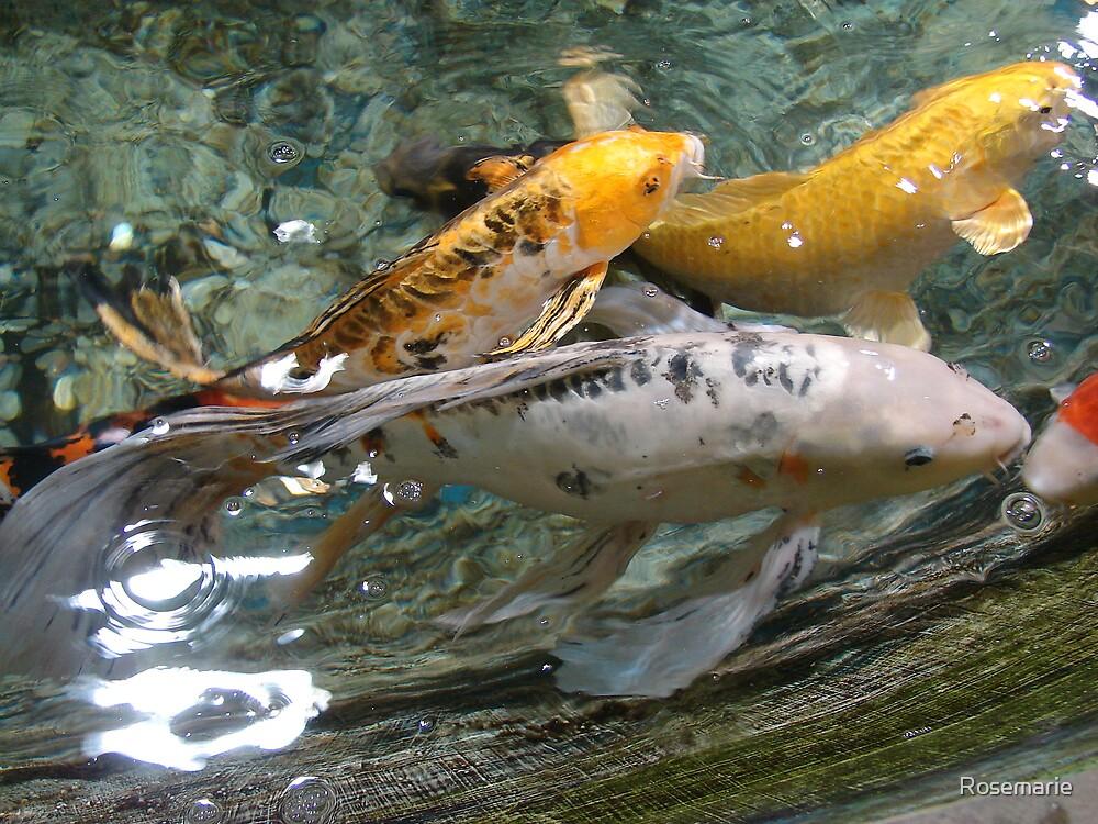 pretty fish by Rosemarie
