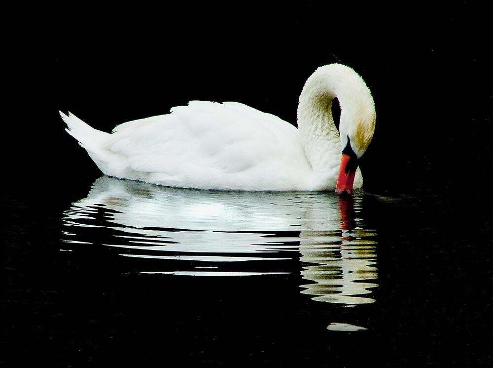 Swan Peace by Moth