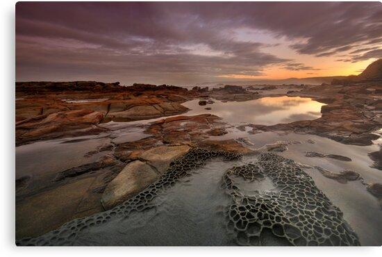 Merewether Rock Platform 5 by Mark Snelson