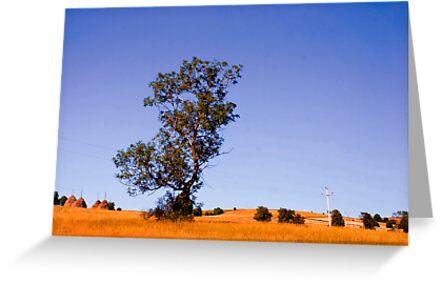 Tree by Miodrag Bogdanovic