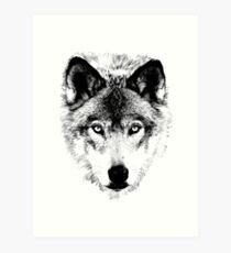 Wolf Face. Digital Wildlife Image. Art Print
