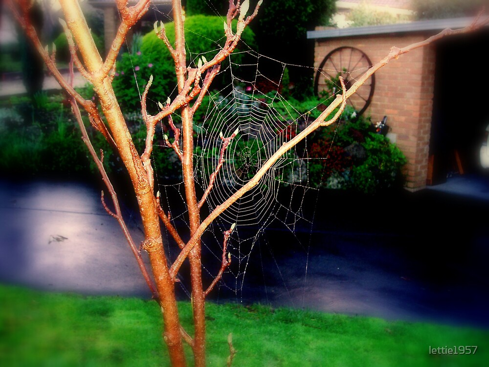 Spider Web by lettie1957