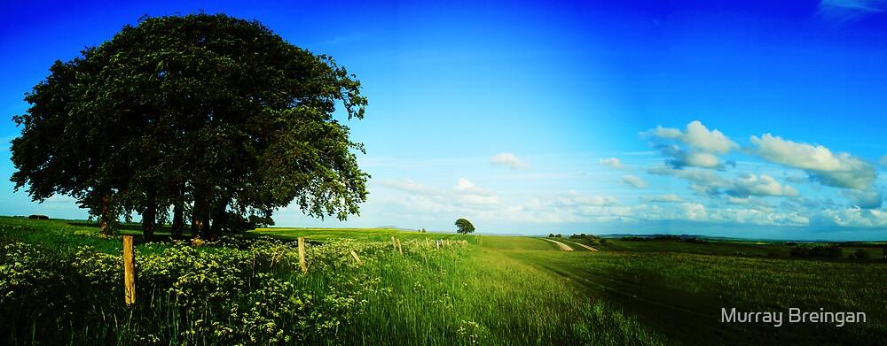 The Salisbury Plain by Murray Breingan