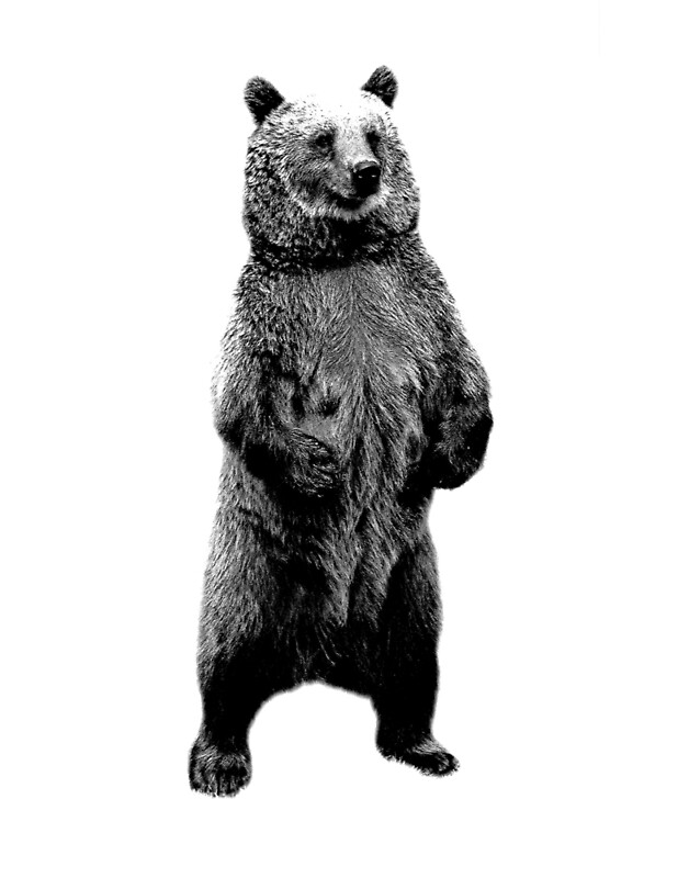 """Bear Standing Up. Wildlife Digital Engraving Image"" Art ..."