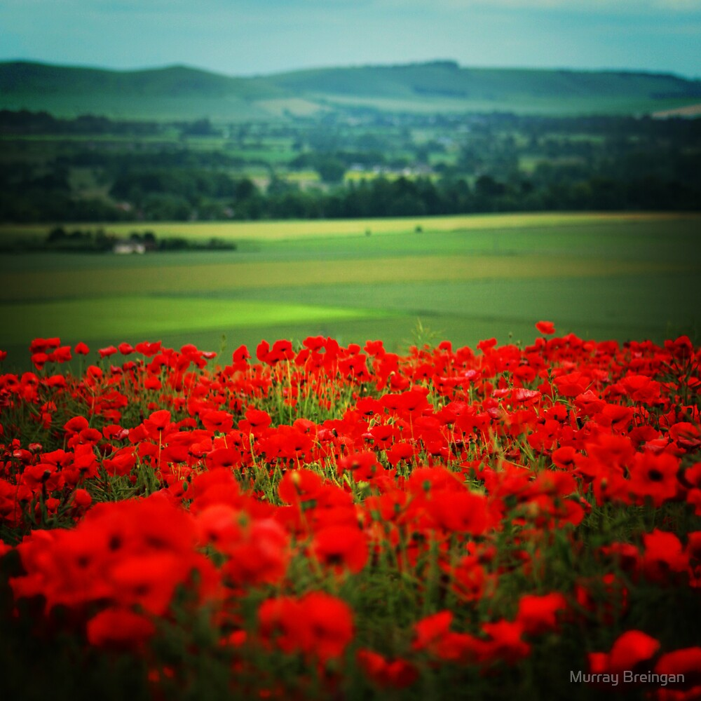 Poppy Field by Murray Breingan