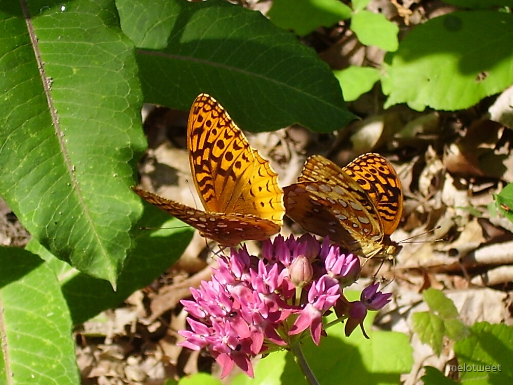 beautiful butterfly by melotweet