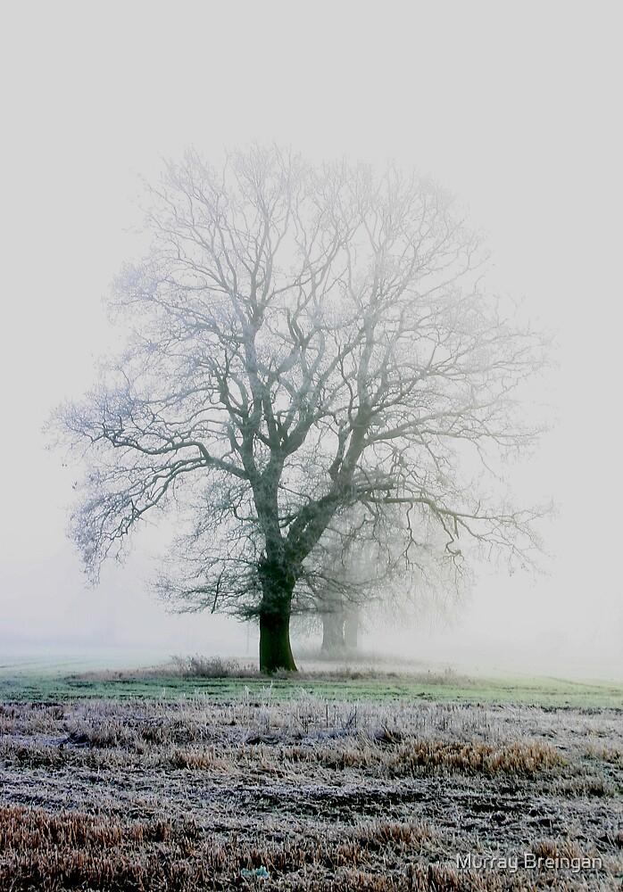 winter land by Murray Breingan