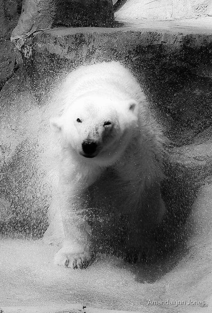 Polar Bear by Amandalynn Jones