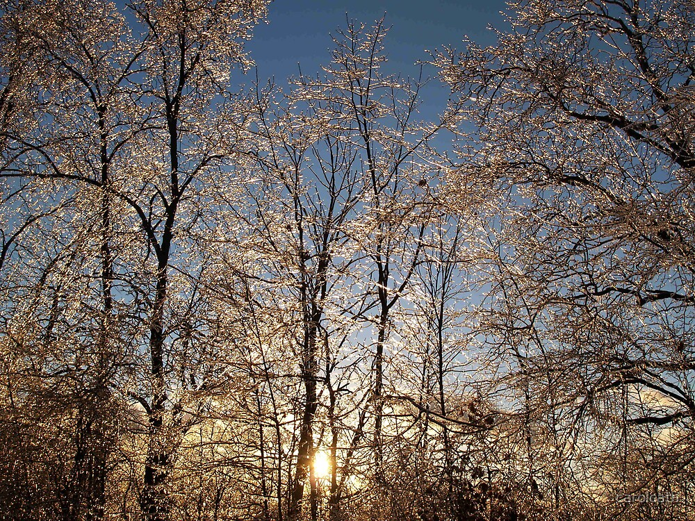 Michigan sun shining after an ice storm , 2007 by carolcath