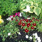 plants of sorted kinds by oilersfan11