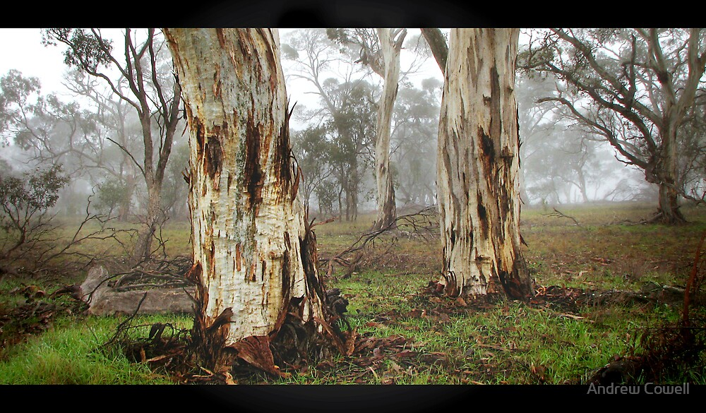 morning gums by Andrew Cowell