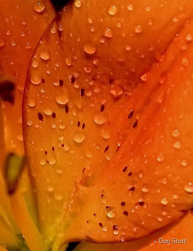 Orange Petals by Don Stott