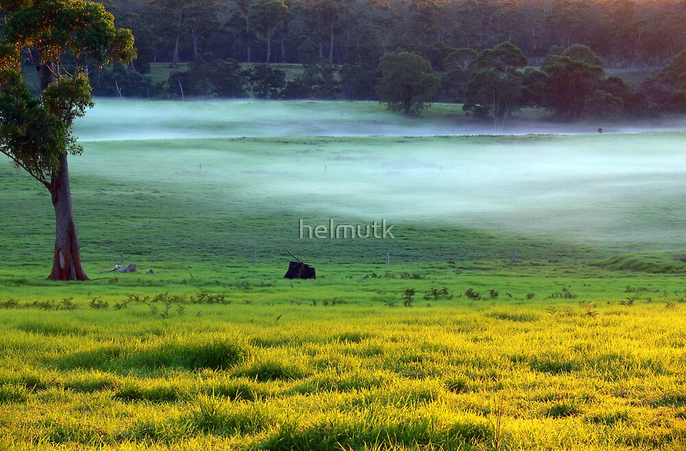 Morning fog by helmutk