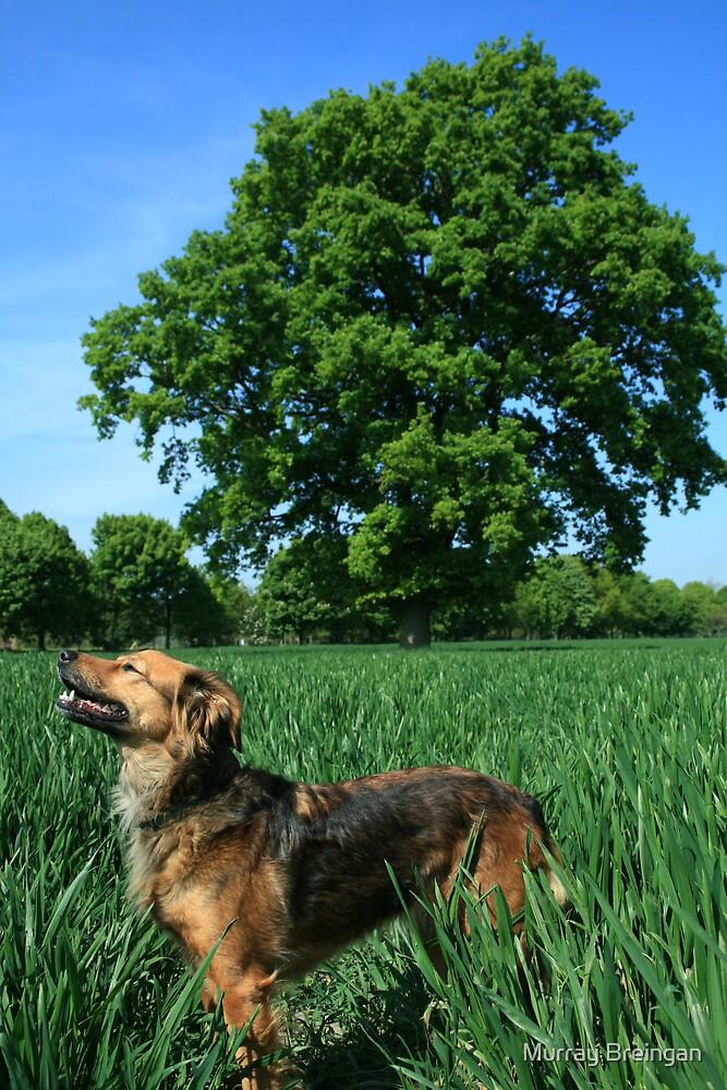 Bella the dog by Murray Breingan