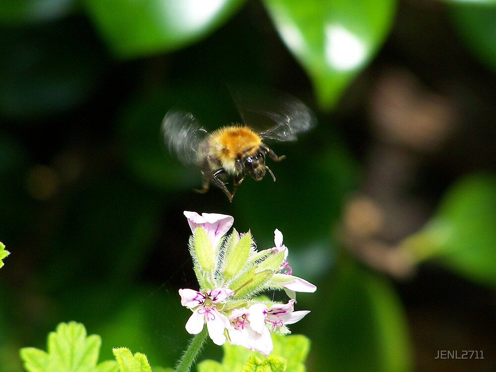 BUMBLE BEE by JENL2711
