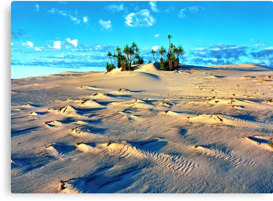Sandforms and Pandanus Stand, Cape Leveque by Mark Boyle