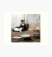 Cats Rural America  Art Print