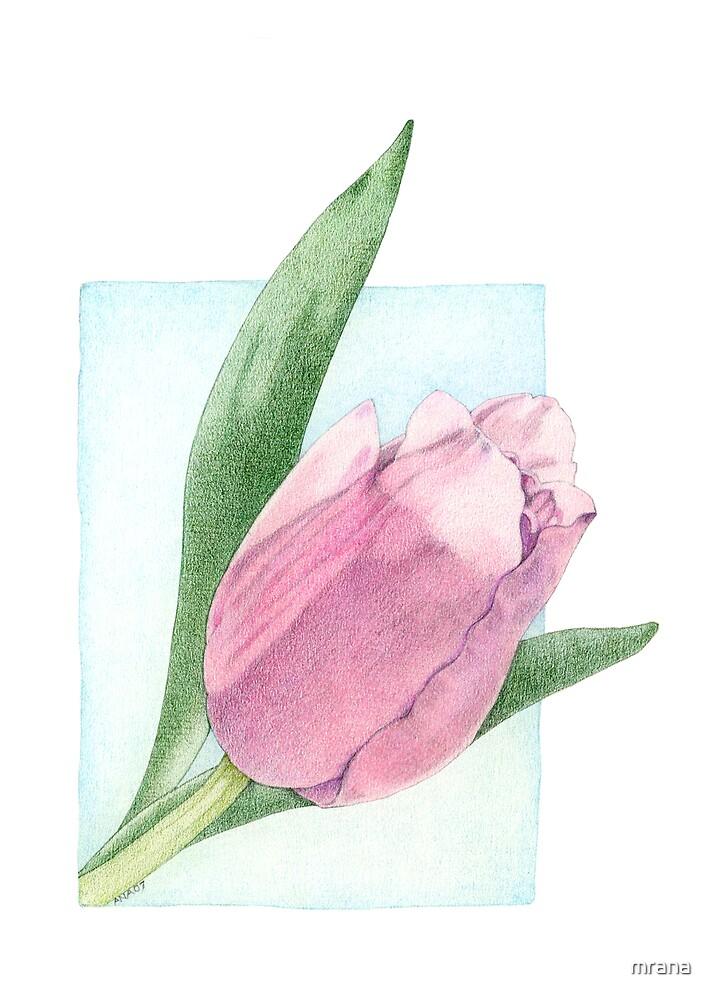 Pink Tulip by Mariana Musa
