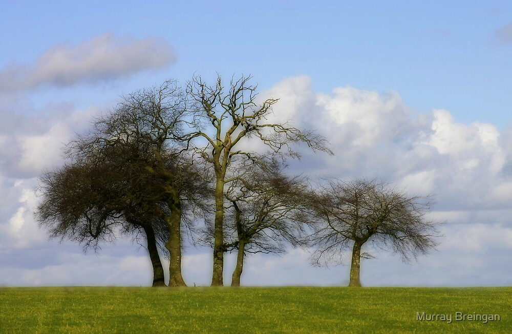 trees by Murray Breingan