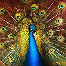 Animal - Bird - Peacock proud by Mike  Savad