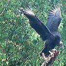 Big Bird by misfitmama