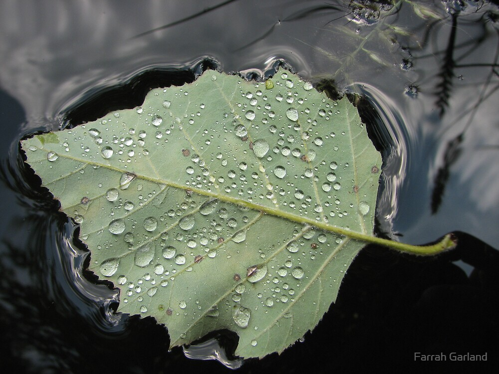 Stephans leaf by Farrah Garland