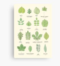 Leaf ID Chart Canvas Print