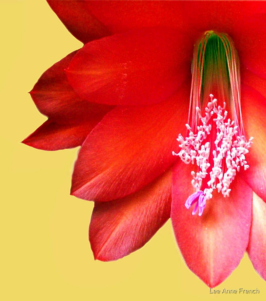 Cactus Flower by Lee Anne French