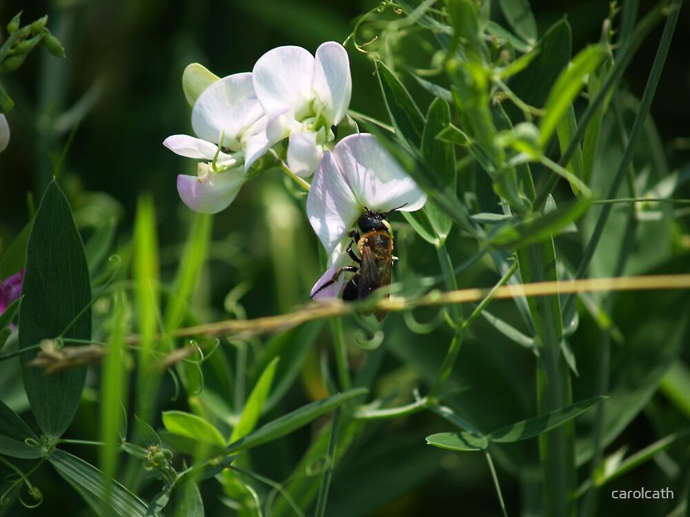 Sweet Pea Bee by carolcath