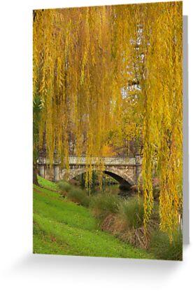 Avon River - Christchurch, New Zealand by Neil