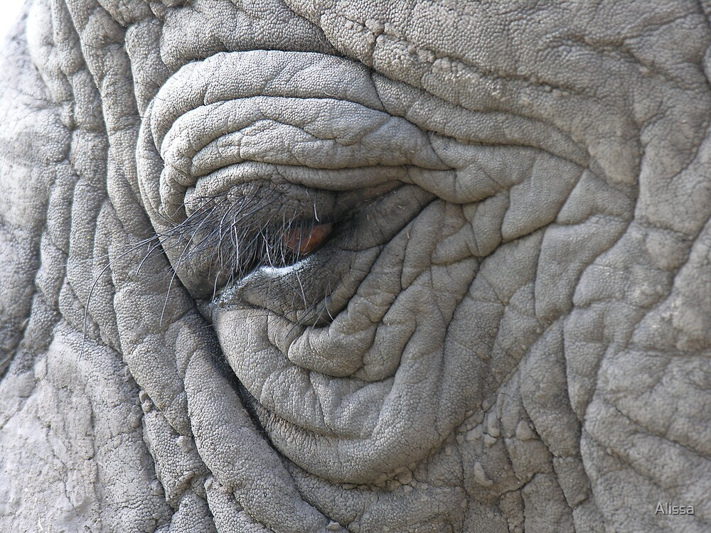 Elephant Eye by Alissa