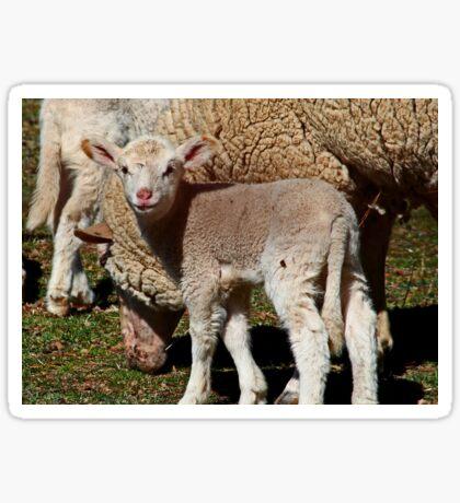 Kleines Lamm Sticker