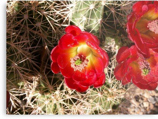 Desert Jewels by Lynniekins