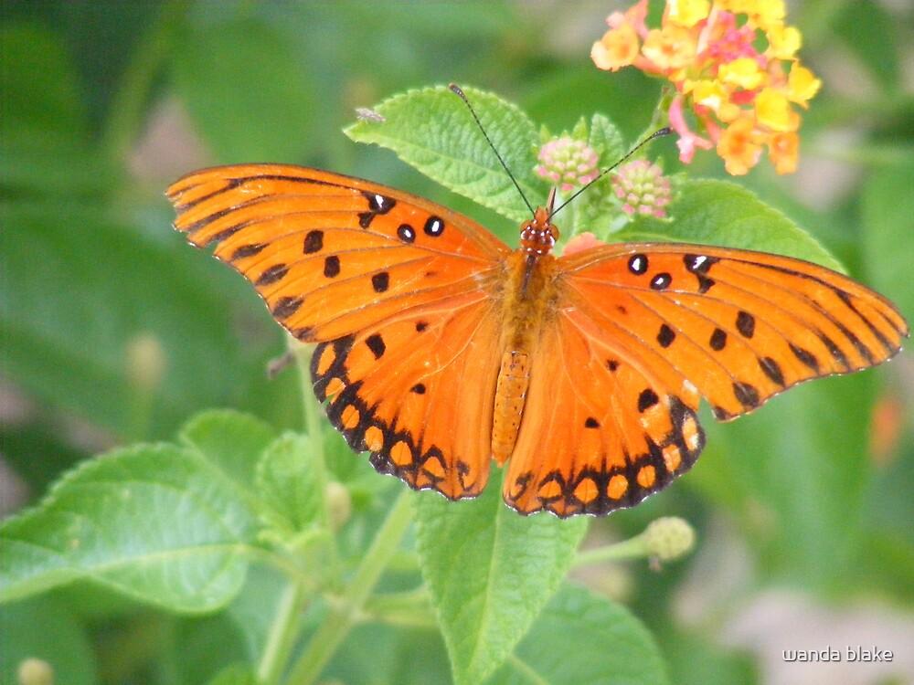 butterfly by wanda blake
