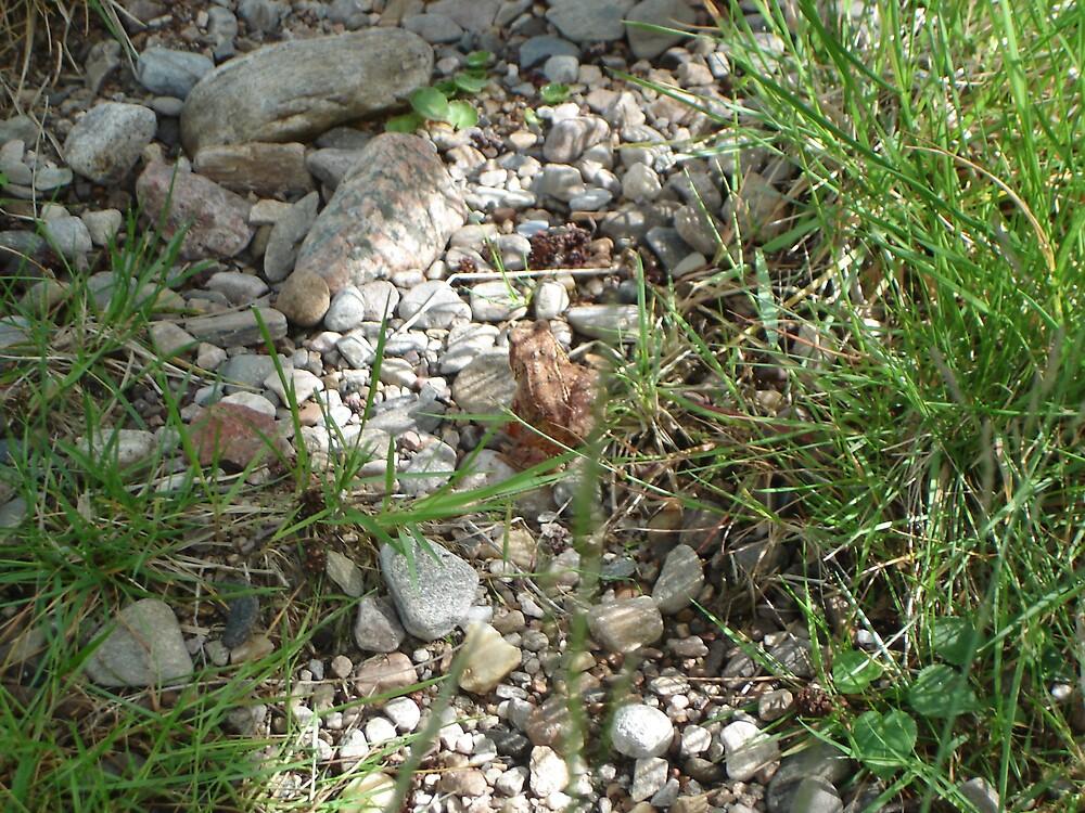 Frog by skippy