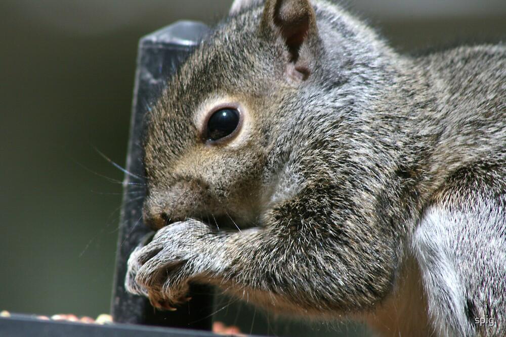 Squirrel Food? by spig