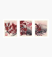 Red Cherry Blossom Triptych Photographic Print