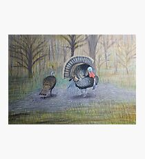 Turkeys Photographic Print