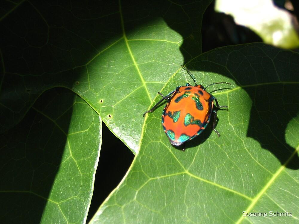 Christmas beetle by Susanne Schmitz