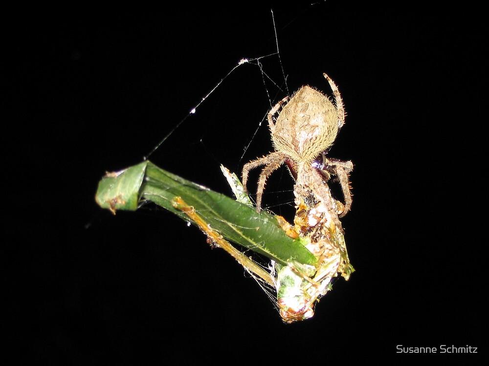 spider, Queensland, Australia by Susanne Schmitz