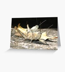 gras hoppers in Queensland, Australia Greeting Card