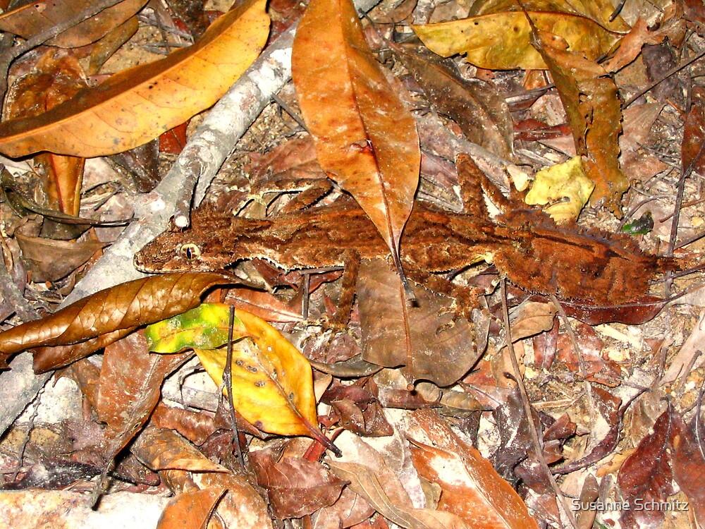 leaf tailed gecko  Queensland  Australia  by Susanne Schmitz