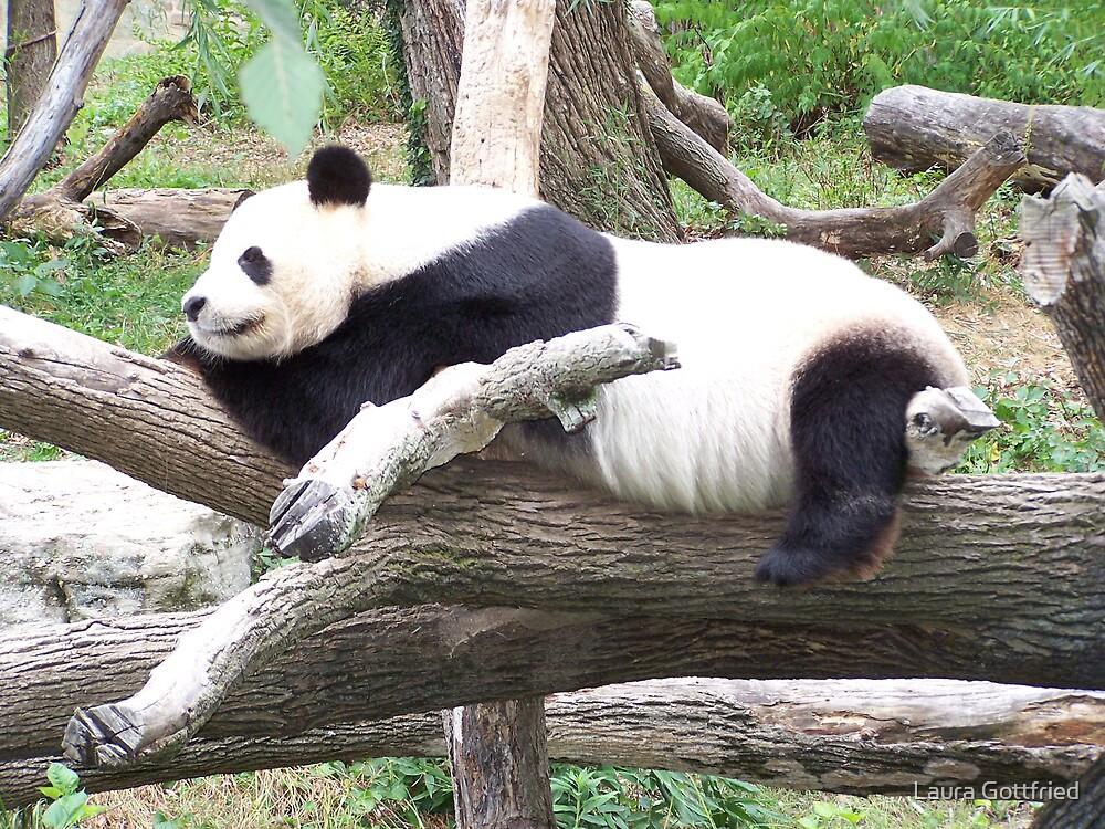 Panda by Laura Gottfried