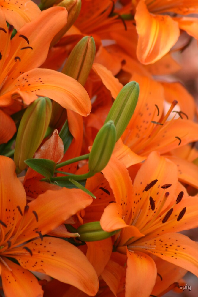 The Garden of Lillies by spig