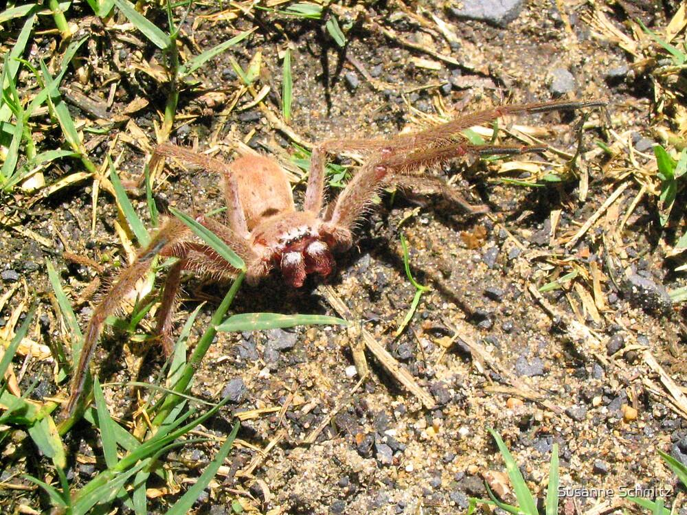 huntsman spider by Susanne Schmitz