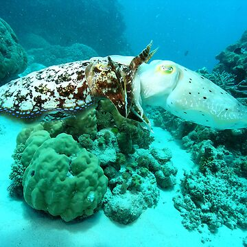 cuttle fish  by sanne424