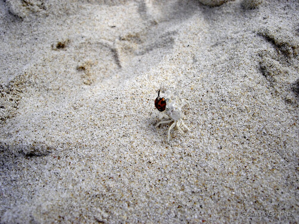 ghostcrab with bug  by Susanne Schmitz