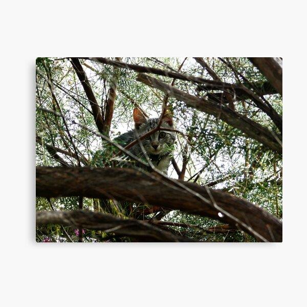 Wet kitten up a tree Canvas Print